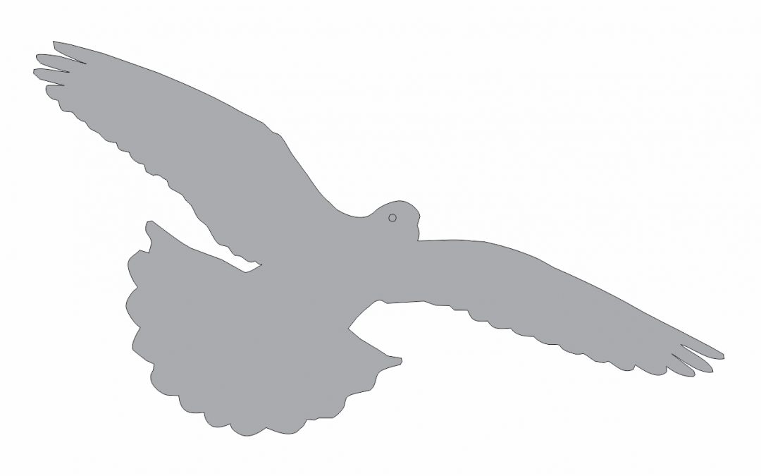 Sombra de paloma 5