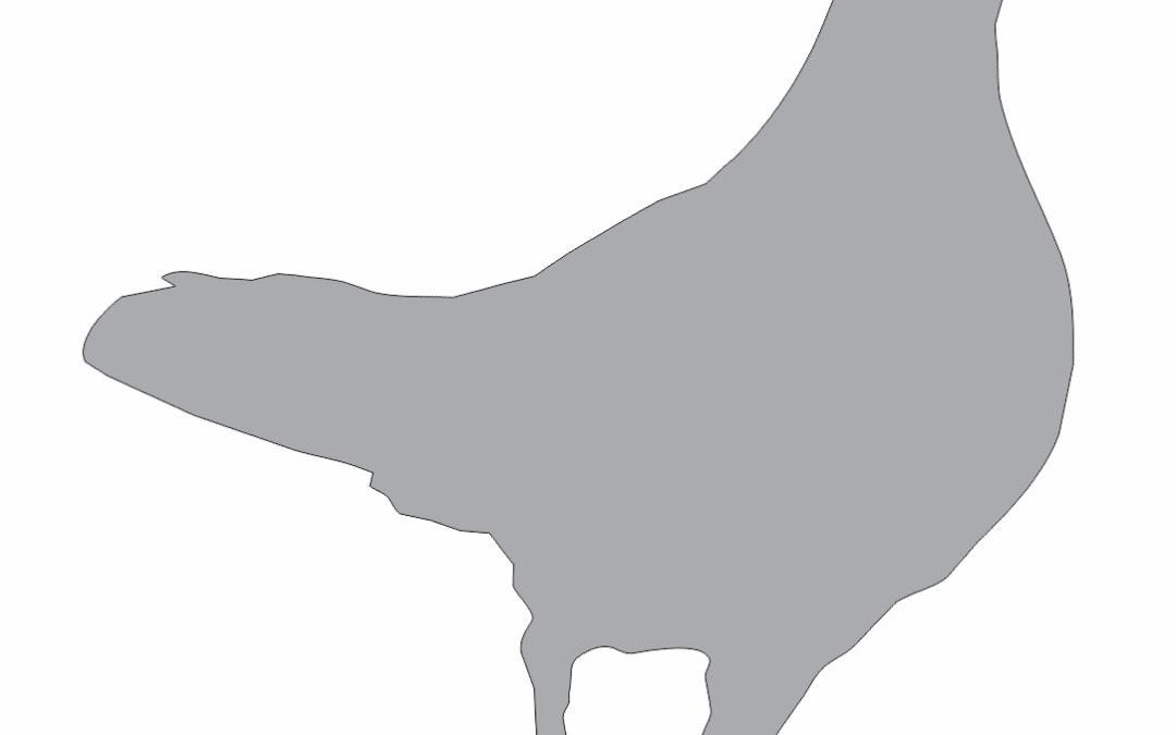 Sombra de paloma 6