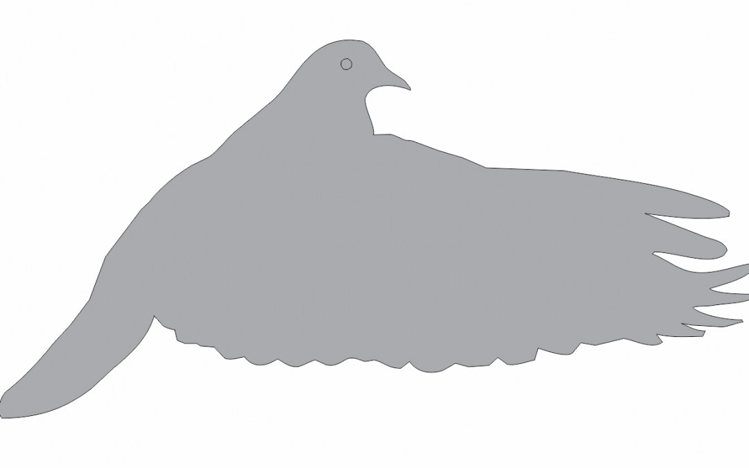 Sombra de paloma 7