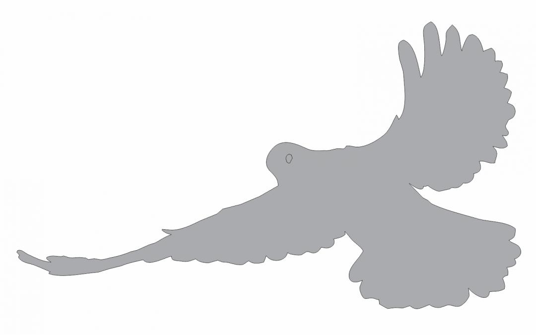 Sombra de paloma 3