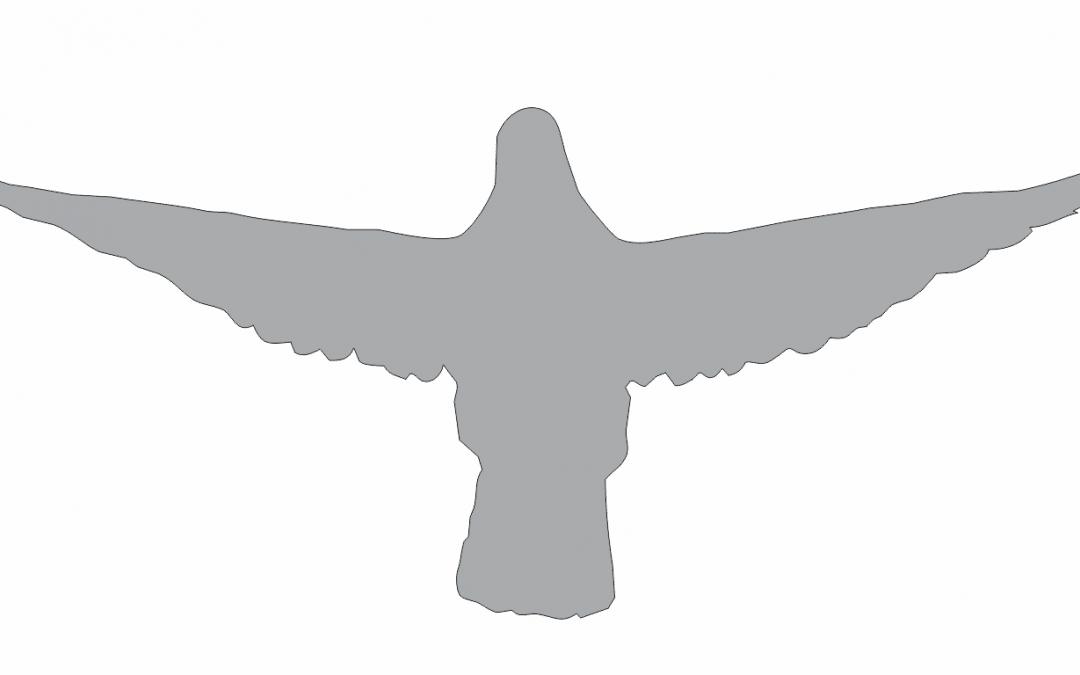 Sombra de paloma 4